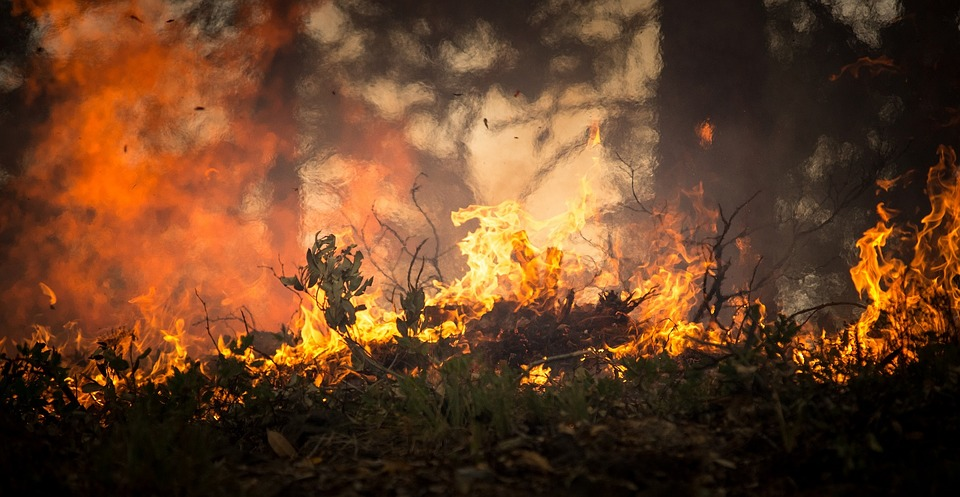 incendio-amazonas-bosque-ONG-bolsonaro-brasil